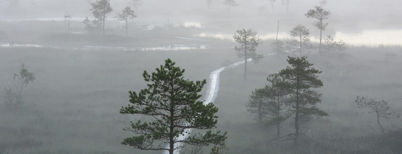 2215_Soomaa National park_Sven Zacek_415655